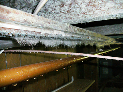 Mold Growth On Floor Joist